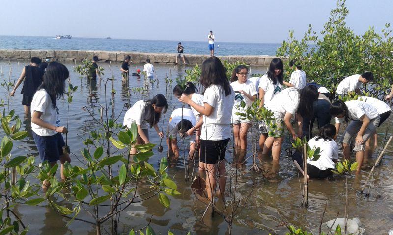 Tanam Mangrove Cegah Bencana Alam  Okezone News
