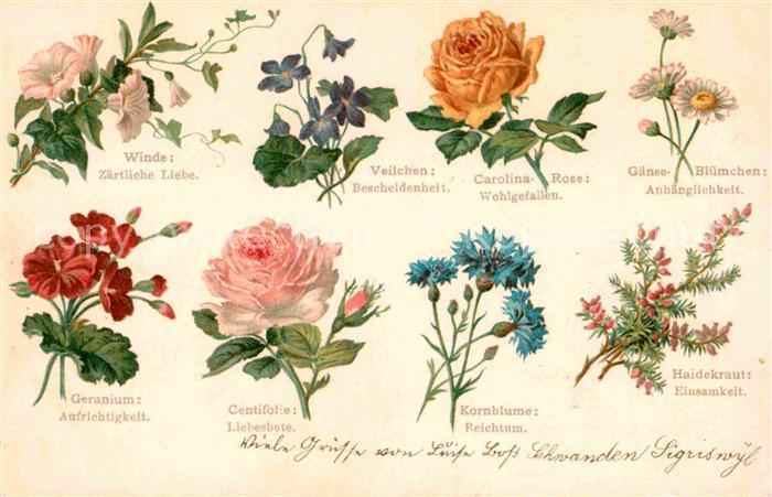 Bedeutung Von Blumen blumen und b umelexikon bedeutung