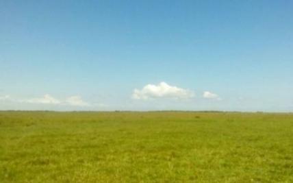 Fazenda rural à venda. centro. palmares do sul - . - Terrenos. sítios e fazendas - Palmares do Sul 702818631   OLX