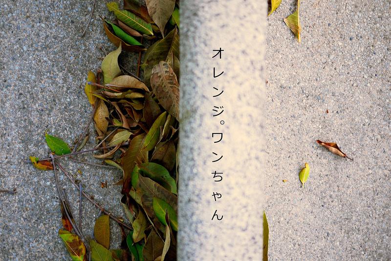 【生活 腳印】家-溜滑梯的記憶。