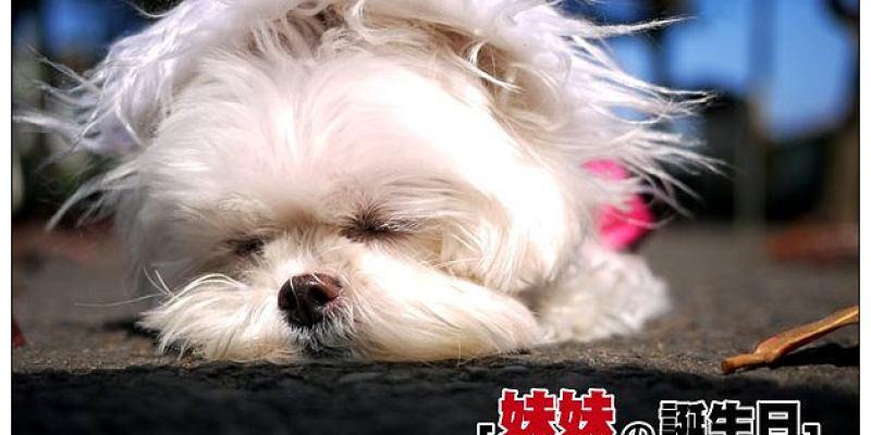 【生活隨記】養寵物請用認養代替購買~牠會更愛你:妹妹五歲生日啦!!!