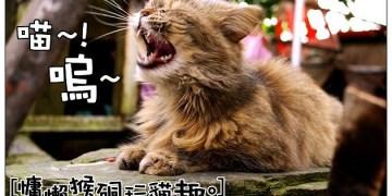【新北慢步遊記】猴硐貓喵村:寧靜鐵道山城~悠閒慵懶的貓咪樂園
