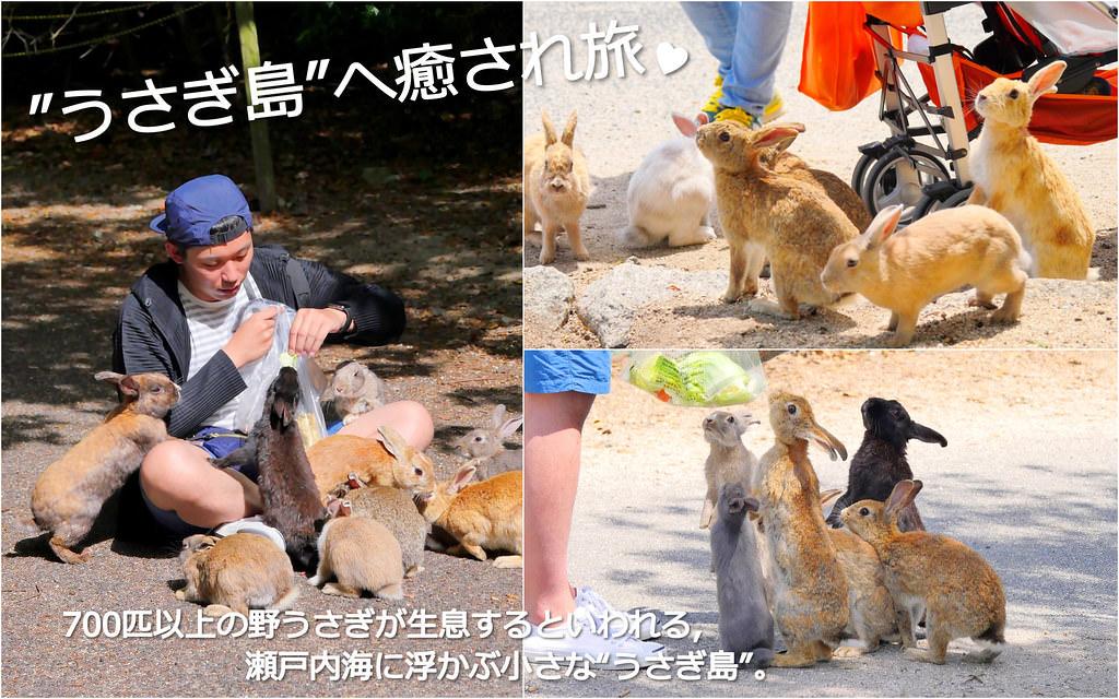大久野島/兔子島_日本廣島:700隻兔兔瘋狂擁抱療癒兔子島/自駕搭車交通指南+要注意的9件事