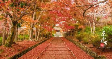 京都賞楓景點│山科毘沙門堂門跡~楓葉地毯的迷人模樣(附賞楓參考行程)