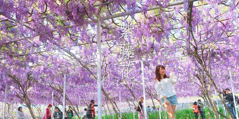 北部也有超美紫藤花!現正爆棚中~紫藤咖啡園屯山園區4/5花況~含交通&門票資訊