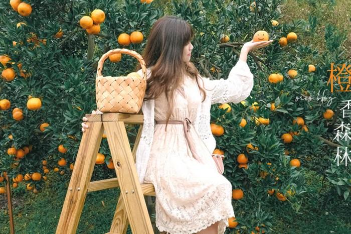 苗栗打卡景點 人氣橙香森林~滿滿的橘子背景溫暖又舒心~門票可抵消費~