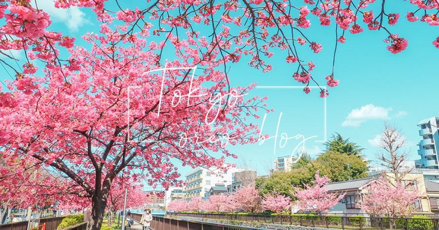 東京賞櫻景點|三月初的大橫川散步道河津櫻~人少好拍的小眾景點