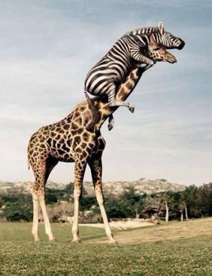 Résultats de recherche d'images pour «zebre surdoué»