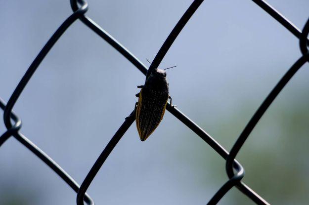 Quand on le voit voler, c'est super impressionnant et ça fait le bruit d'un hélico !