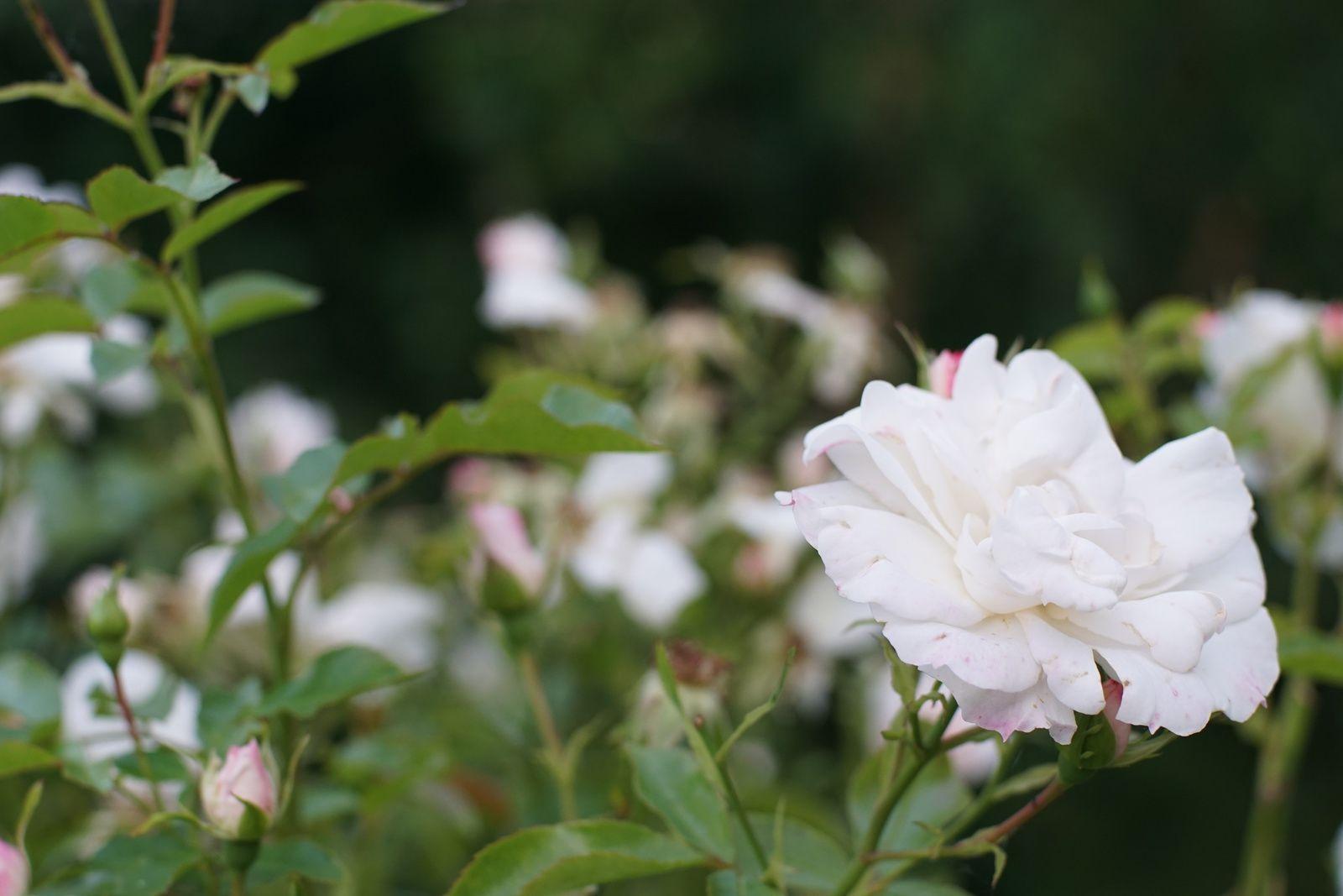 Quelques fleurs...