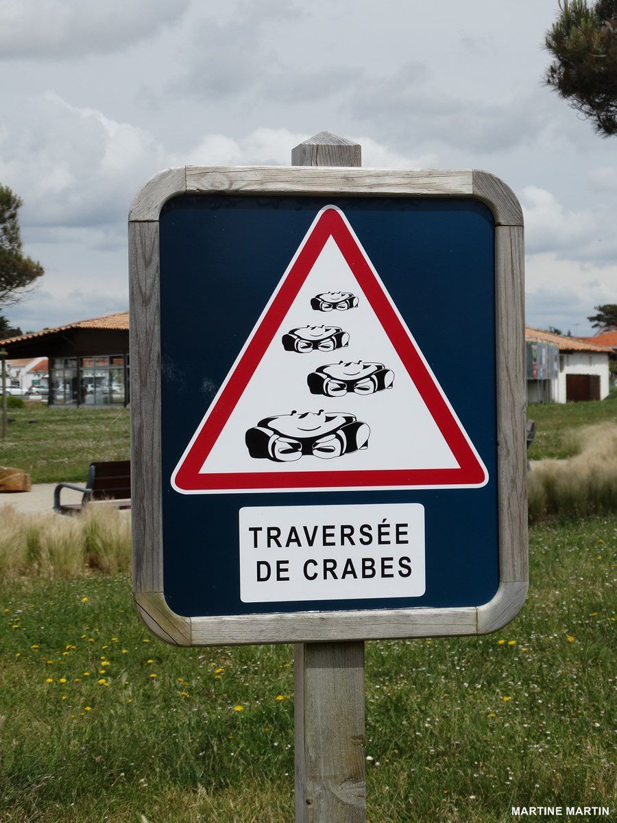 Traversée de crabes à St Gilles Croix de vie