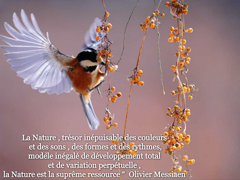 Image citation 30
