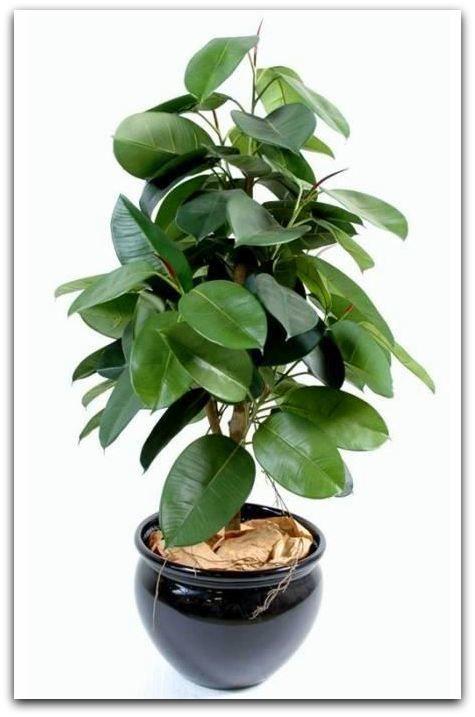 Plantes Dépolluantes Pour La Maison : plantes, dépolluantes, maison, Plantes, Dépolluantes, Maison, Saine, Maître