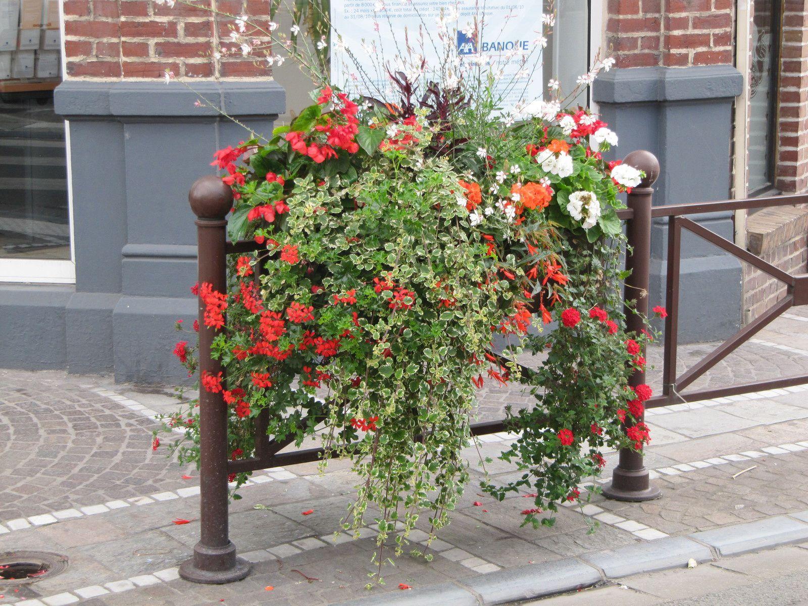 fleurs de printemps pour jardiniere vivaces jardin de. Black Bedroom Furniture Sets. Home Design Ideas