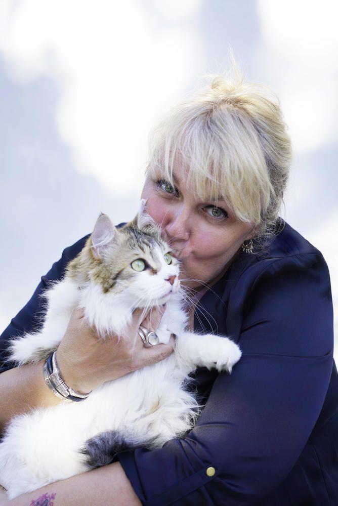 La Vie Secrete Des Chats Saison 3 : secrete, chats, saison, Secrète, Chats, Nouvelle, Saison, Septembre, Leblogtvnews