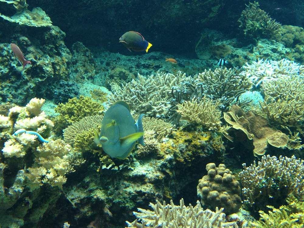 """Résultat de recherche d'images pour """"l'écosystème unique d'Okinawa"""""""