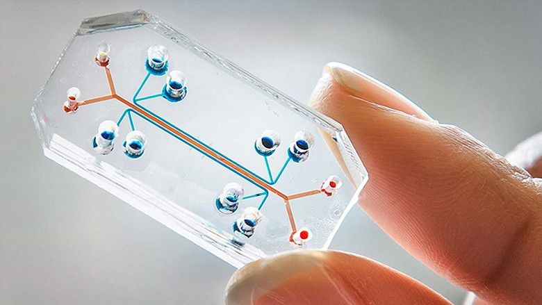 https://i0.wp.com/img.over-blog-kiwi.com/1/04/76/23/20150207/ob_dd653b_organs-on-a-chip-microfluidics-e142329.jpg?w=878
