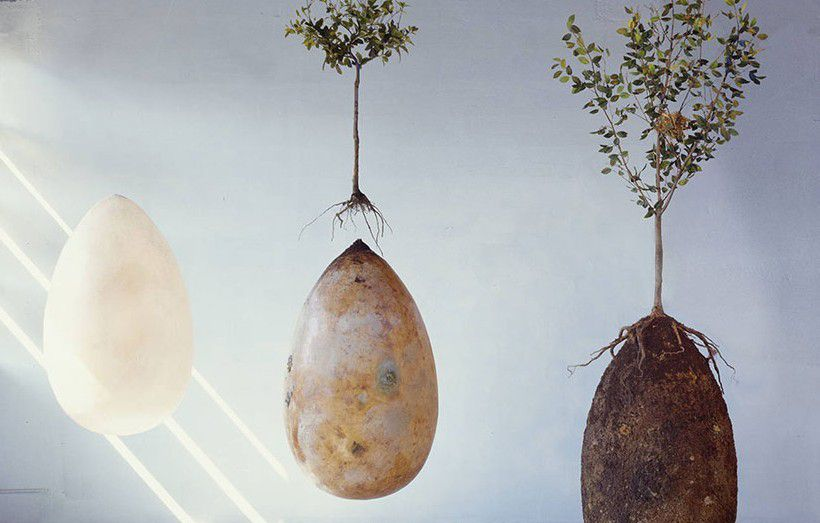 https://i0.wp.com/img.over-blog-kiwi.com/1/04/76/23/20150228/ob_aa5a39_biodegradable-burial-pod-memory-forest.jpg?w=878