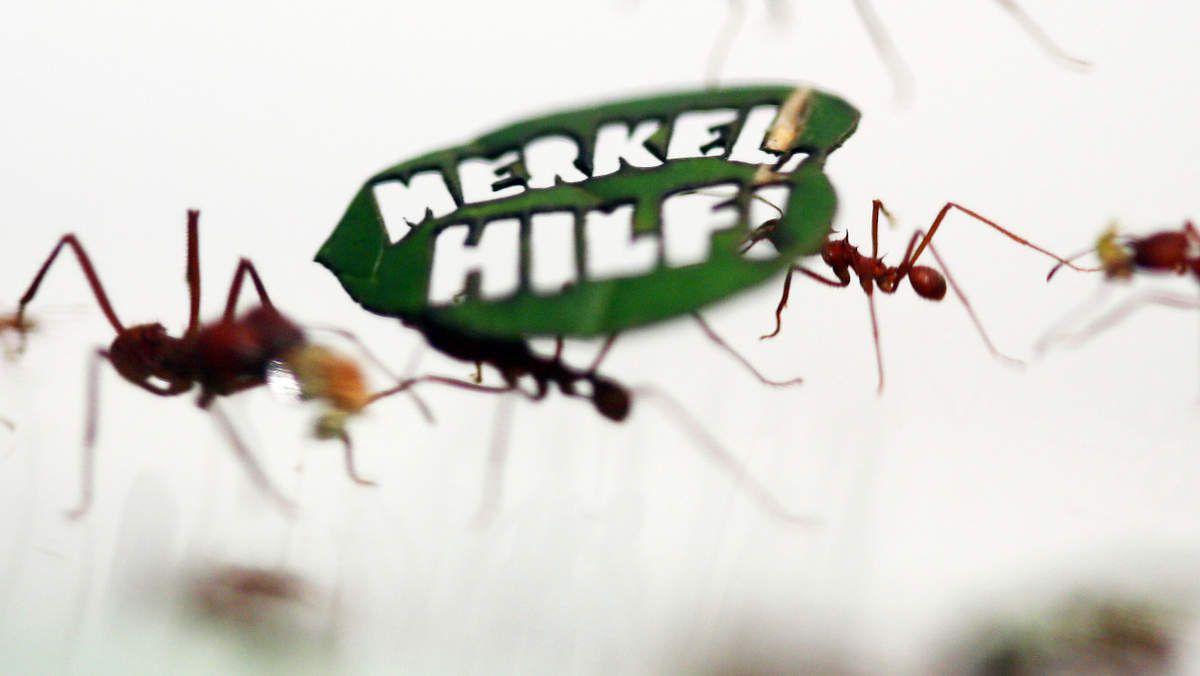 Amazonie: un demi-million de fourmis manifestent à l'appel du WWF