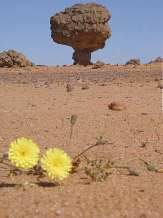 L'Algérie Pays du Soleil et de Beauté.