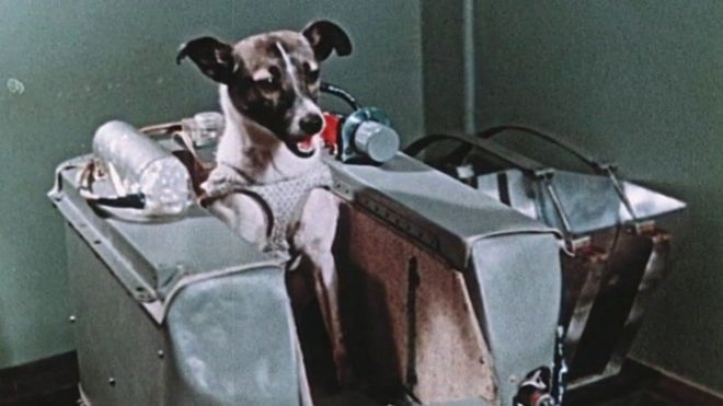 Tras superar las duras pruebas a las que fue sometida, Laika fue la elegida para morir en el espacio y entrar en la historia.