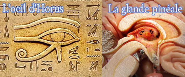 La glande pinéale ce 3ème Oeil d'Horus, que l'on nous empêche d'utiliser…