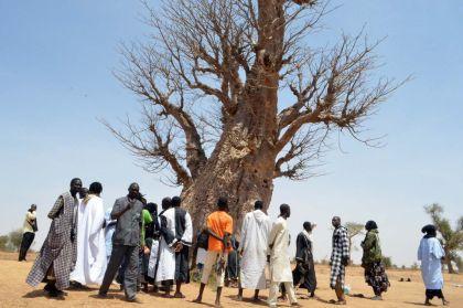 """Le baobab de Mame Cheikh Ibrahima Fall à """"MBACKE KADIOR"""""""