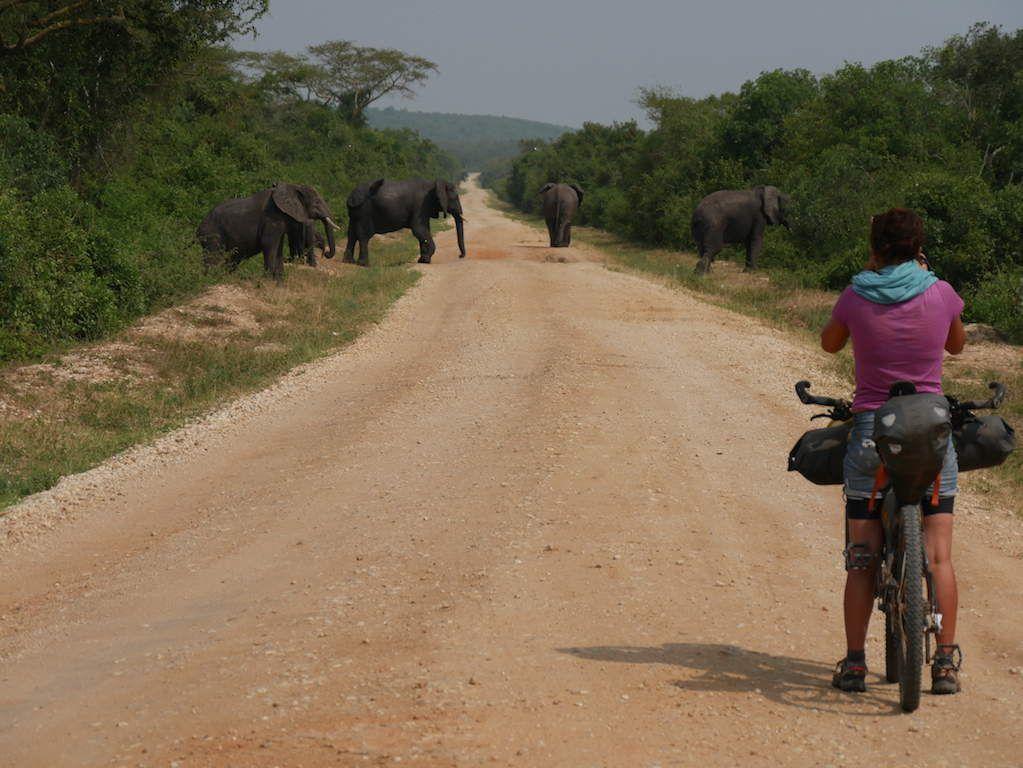 Uganda/ Sur la trace des éléphants