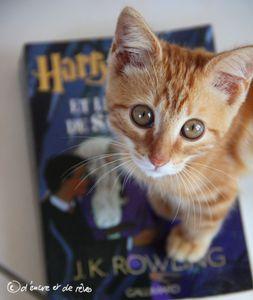 &quot&#x3B;Tag Ultime&quot&#x3B; Harry Potter