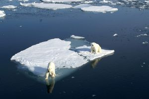 ours polaires sur un iceberg