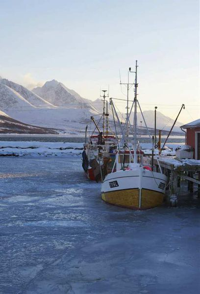Le Skrei : Du cabillaud norvégien dans votre assiette