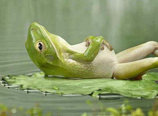 """Résultat de recherche d'images pour """"zen developpement personnel"""""""