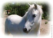 cheval-blanc.jpg