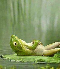 grenouille-relax.jpg