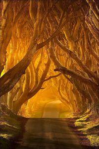 Bregagh-Road--Armoy--Ireland.jpg