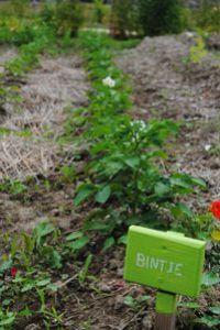 6.07.13-jardin-colectif-de-la-Reyssouze-0240.JPG