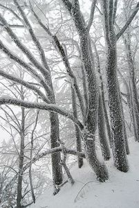 Alpesphoto-2010-01-09-Hiver13.jpg