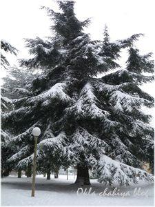 neige_7.jpg