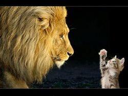 lion-chat_resize.jpg