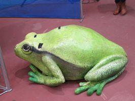 loperhet-ebullition-grenouille