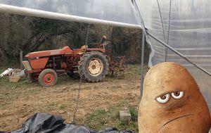patates-photo-2.jpg
