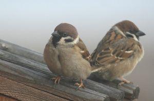 37 - Vögelchen 7458