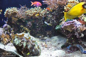 Monaco-musee-oceano211212-096--c-Brigitte-Lachaud-.JPG