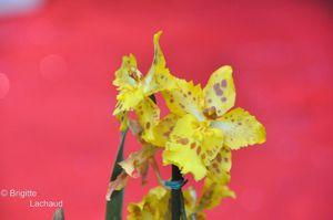 Fete-du-citron18022012-158--c-Brigitte-Lachaud-.JPG