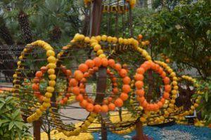 Fete-du-citron-150214-048.JPG