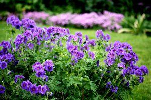 36b - Mehr Garten 3585