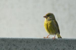 37 - Vögelchen 3462