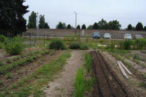 6.07.13-jardin-colectif-de-la-Reyssouze-0236.JPG