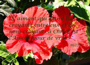 fleur-d-hibiscus-rouge.jpg