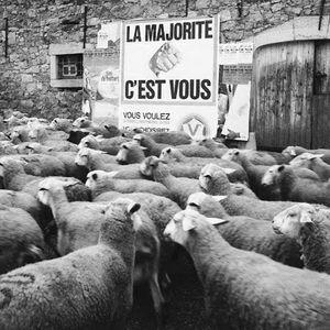 moutons_m.jpg